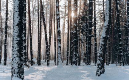 Wald in Minsk